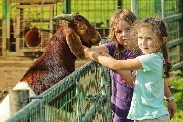 Intervencie s asistenciou zvierat Animoterapia