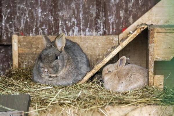 zajaciky.jpg
